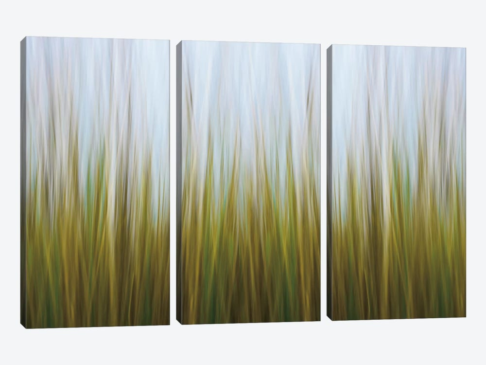 Seagrass Canvas by Katherine Gendreau 3-piece Canvas Print