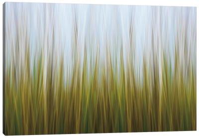 Seagrass Canvas Canvas Art Print