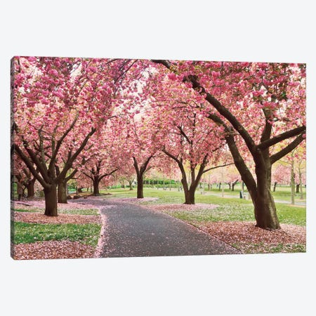 Cherry Parade Canvas Print #WAC2486} by Katherine Gendreau Canvas Wall Art