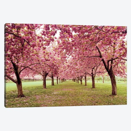 Hall of Cherries Canvas Print #WAC2488} by Katherine Gendreau Canvas Art Print