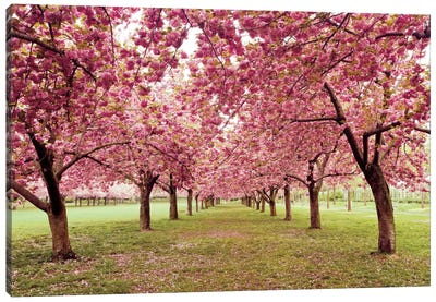 Hall of Cherries Canvas Print #WAC2488