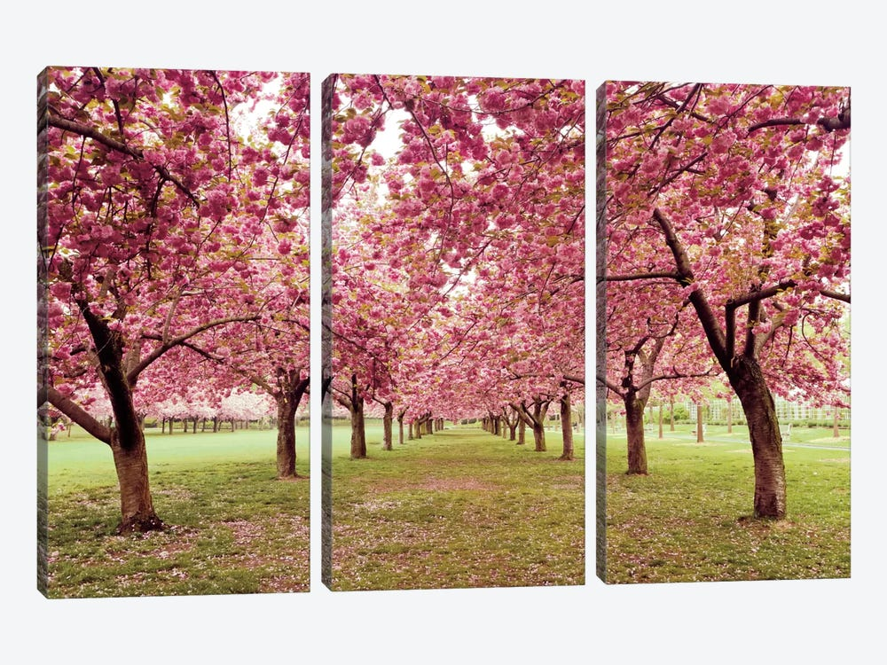 Hall of Cherries by Katherine Gendreau 3-piece Canvas Art Print
