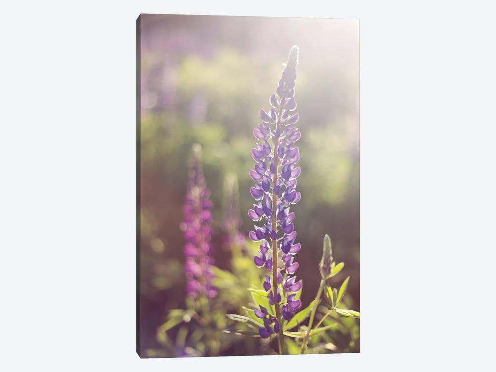 Lupine Flare by Katherine Gendreau 1-piece Canvas Wall Art
