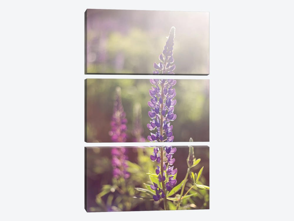 Lupine Flare by Katherine Gendreau 3-piece Canvas Wall Art