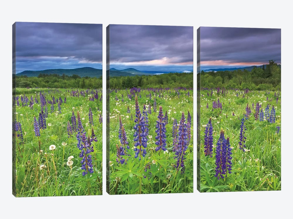 Lupine Sunrise by Katherine Gendreau 3-piece Art Print
