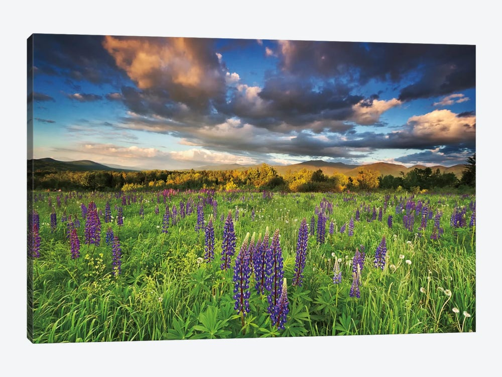 Lupine Sunset by Katherine Gendreau 1-piece Canvas Artwork