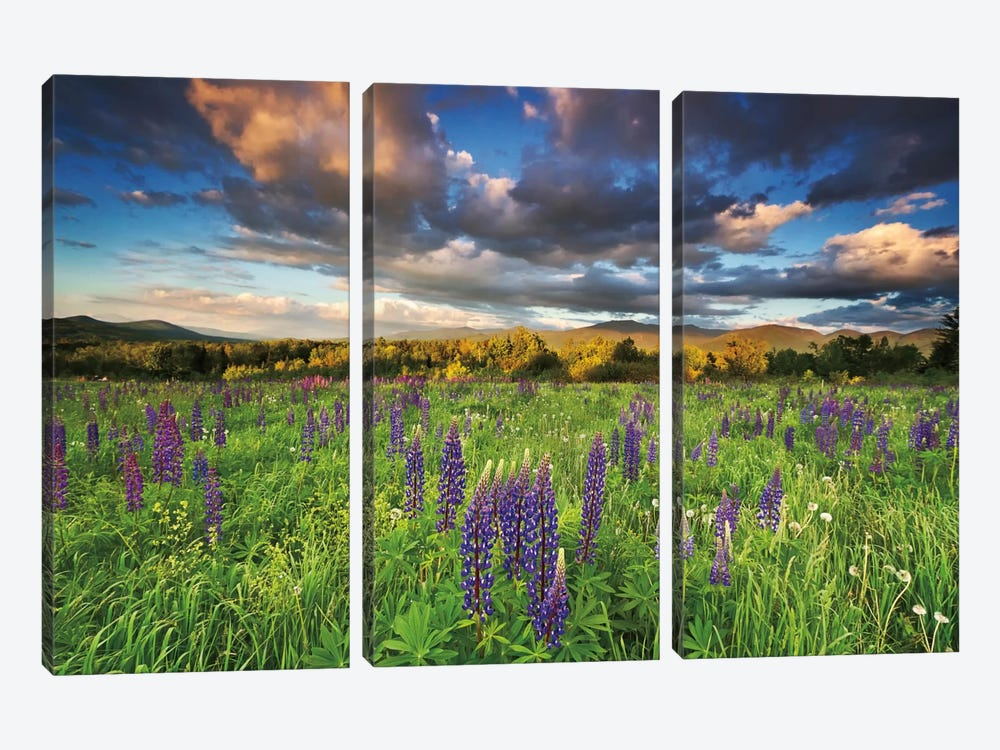 Lupine Sunset by Katherine Gendreau 3-piece Canvas Art