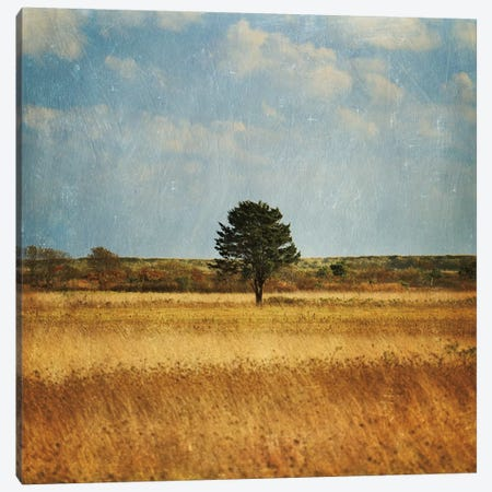 The Lonely Tree Canvas Print #WAC2494} by Katherine Gendreau Art Print