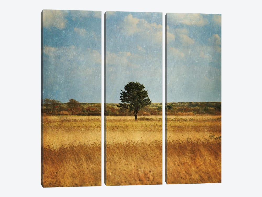 The Lonely Tree by Katherine Gendreau 3-piece Canvas Wall Art