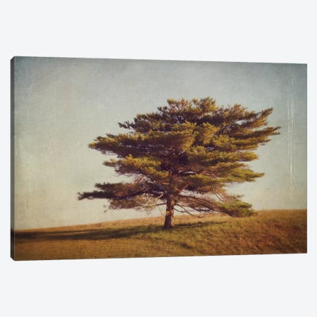 Windward Tree Canvas Print #WAC2495} by Katherine Gendreau Art Print