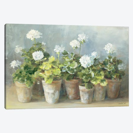 White Geraniums Canvas Print #WAC254} by Danhui Nai Canvas Art