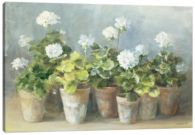 White Geraniums Canvas Art Print