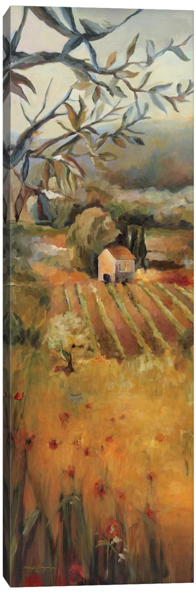 Vineyard in the Valley I Canvas Art Print