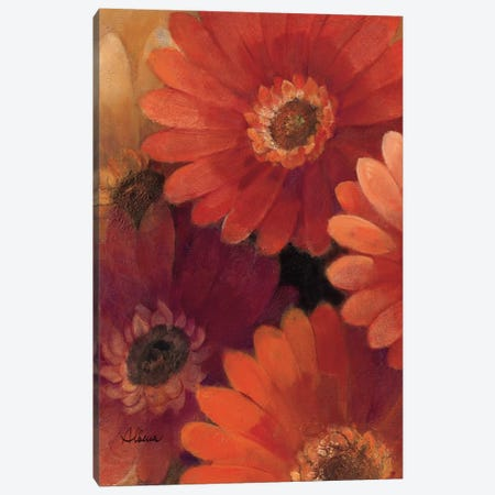 Garden of Gerberas II Canvas Print #WAC2756} by Albena Hristova Canvas Art