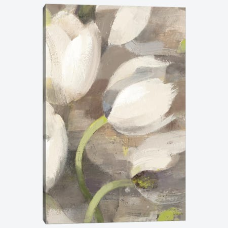 Tulip Delight II Canvas Print #WAC2785} by Albena Hristova Art Print