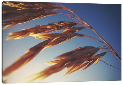 Windy Wheat Fields II Canvas Print #WAC2894