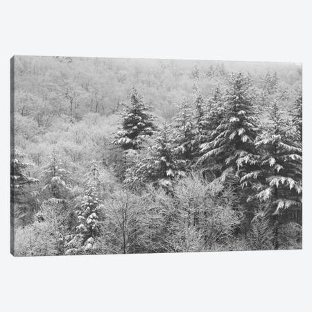 After the Snowstorm Canvas Print #WAC2905} by Laura Marshall Canvas Art Print