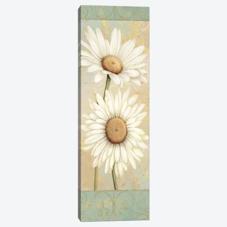 Beautiful Daisies I  Canvas Print #WAC298} by Daphne Brissonnet Canvas Print