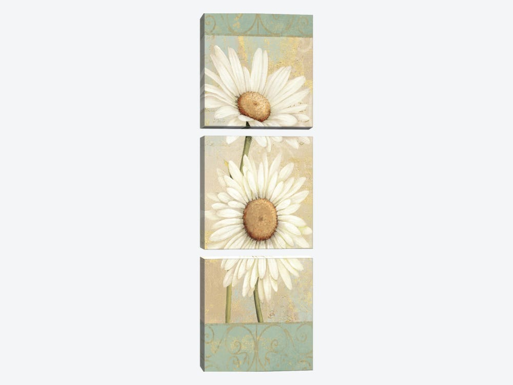 Beautiful Daisies I by Daphne Brissonnet 3-piece Canvas Wall Art