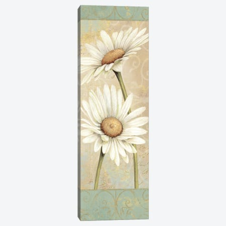 Beautiful Daisies II  Canvas Print #WAC299} by Daphne Brissonnet Canvas Art Print