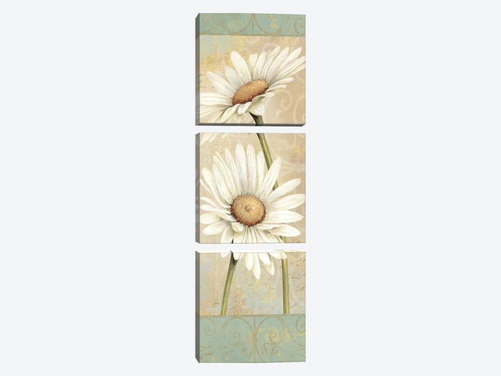 Beautiful Daisies II by Daphne Brissonnet 3-piece Canvas Print