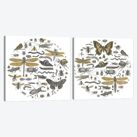 Insect Circle Diptych Canvas Print Set #WAC2HSET016} by Wild Apple Portfolio Canvas Wall Art