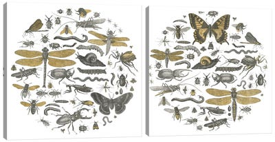 Insect Circle Diptych Canvas Art Print