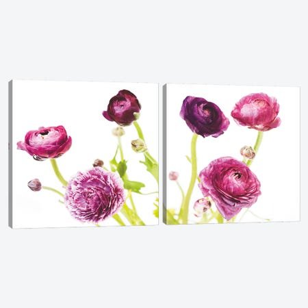 Spring Ranunculus Diptych Canvas Print Set #WAC2HSET089} by Laura Marshall Canvas Art