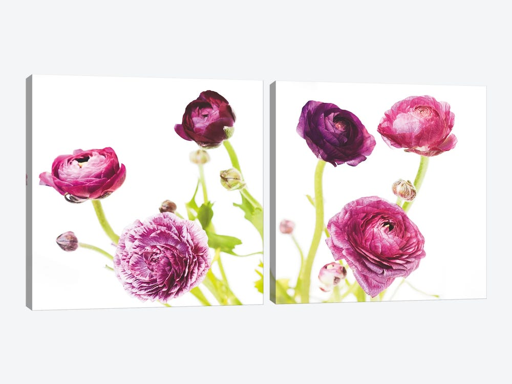 Spring Ranunculus Diptych by Laura Marshall 2-piece Canvas Art