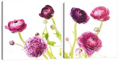 Spring Ranunculus Diptych Canvas Art Print