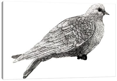 Peace And Joy Dove Element Canvas Art Print