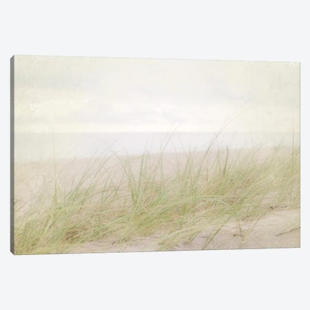 Beach Grass IV Canvas Print #WAC3165} by Elizabeth Urquhart Canvas Artwork