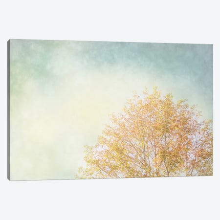 Looking Up Canvas Print #WAC3173} by Elizabeth Urquhart Canvas Wall Art