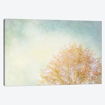 Looking Up Canvas Print #WAC3173} by Elizabeth Urquhart Canvas Wall Art
