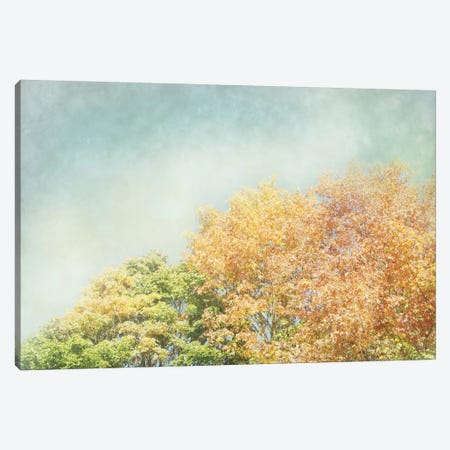 Looking Up II 3-Piece Canvas #WAC3174} by Elizabeth Urquhart Canvas Print