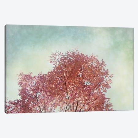 Looking Up III Canvas Print #WAC3175} by Elizabeth Urquhart Canvas Art Print