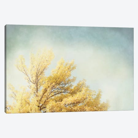Looking Up IV 3-Piece Canvas #WAC3176} by Elizabeth Urquhart Canvas Print