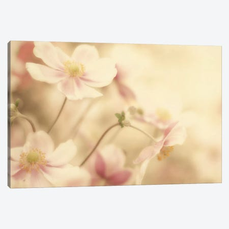 Close Up III Canvas Print #WAC3179} by Elizabeth Urquhart Canvas Artwork