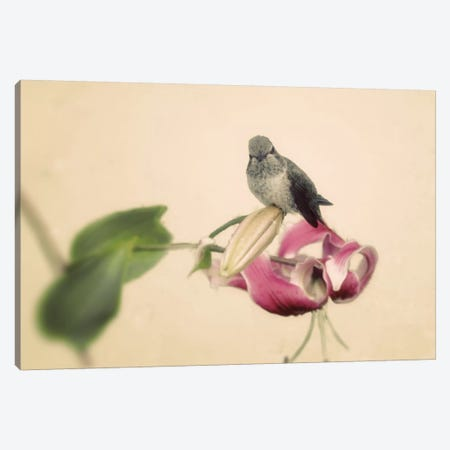 Resting Canvas Print #WAC3181} by Elizabeth Urquhart Canvas Print