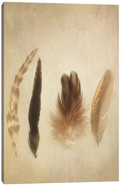 Feathers I Canvas Art Print