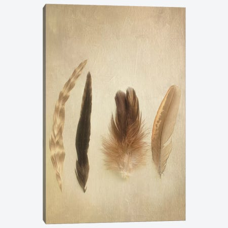 Feathers I Canvas Print #WAC3184} by Elizabeth Urquhart Canvas Artwork
