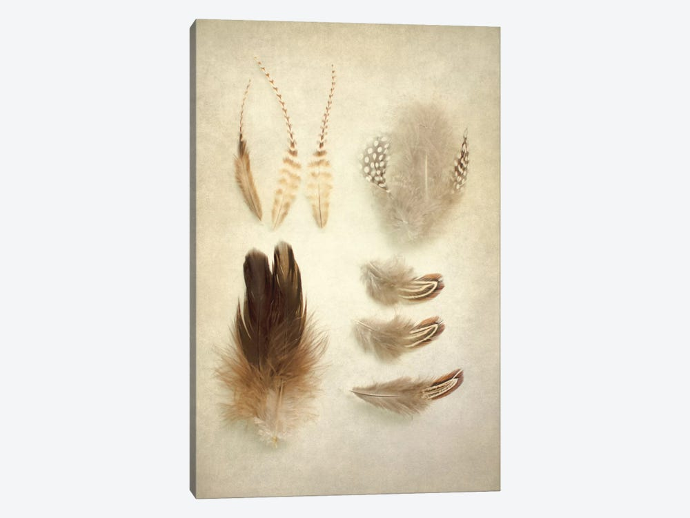 Feathers II 1-piece Canvas Wall Art