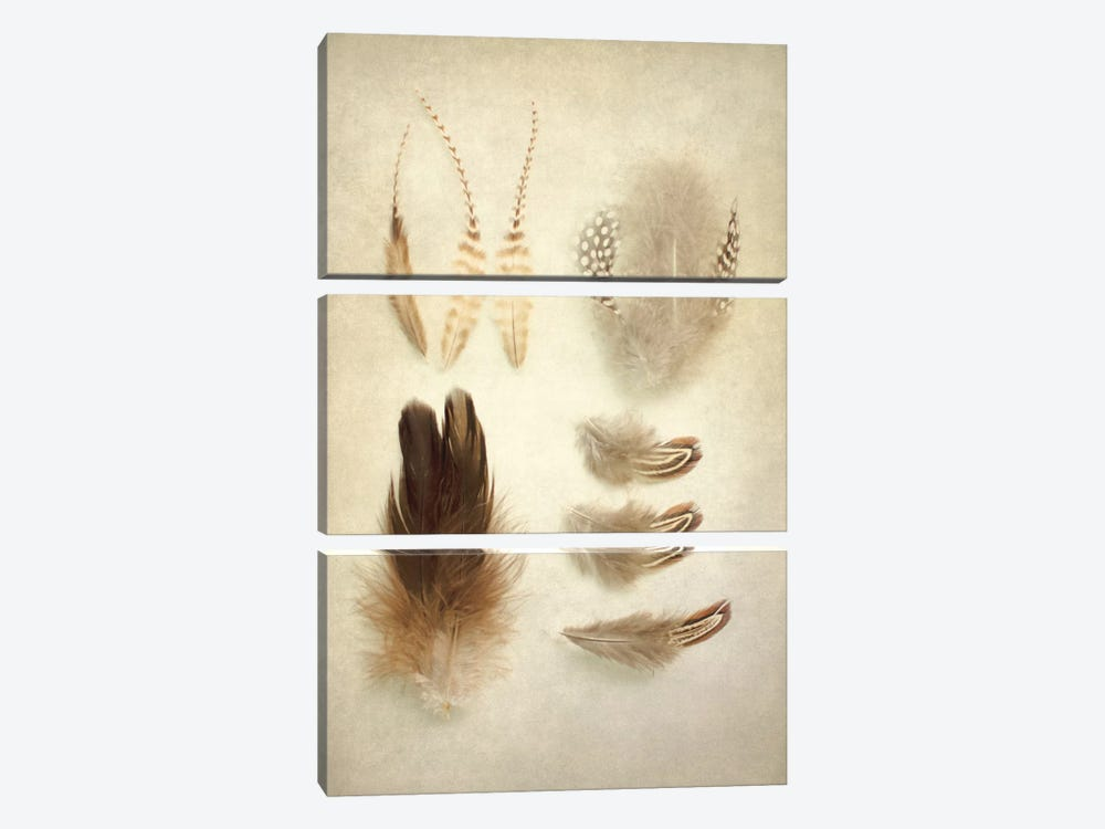 Feathers II by Elizabeth Urquhart 3-piece Canvas Art