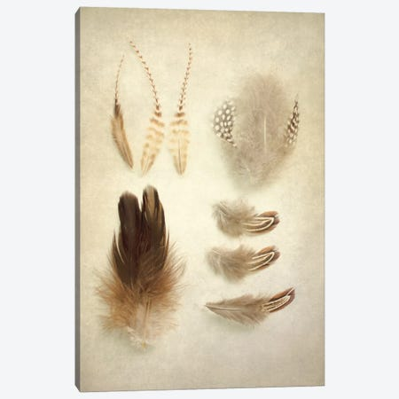 Feathers II Canvas Print #WAC3185} by Elizabeth Urquhart Canvas Art