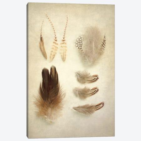 Feathers II Canvas Print #WAC3185} by Elizabeth Urquhart Canvas Art