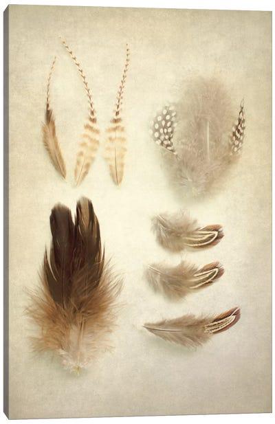 Feathers II Canvas Art Print