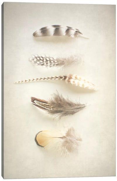 Feathers III Canvas Print #WAC3186