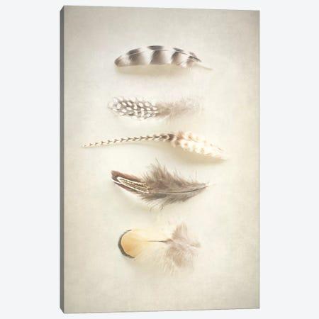 Feathers III Canvas Print #WAC3186} by Elizabeth Urquhart Canvas Wall Art