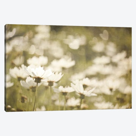 Daisies I Canvas Print #WAC3187} by Elizabeth Urquhart Canvas Art