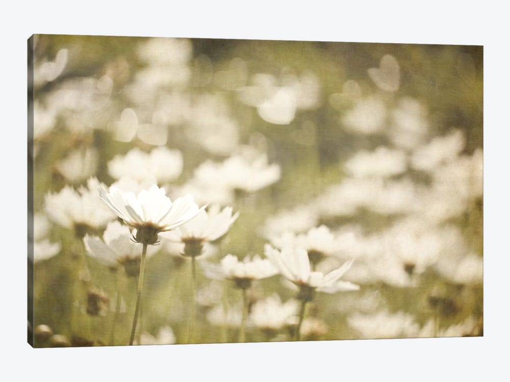 Daisies I by Elizabeth Urquhart 1-piece Canvas Artwork